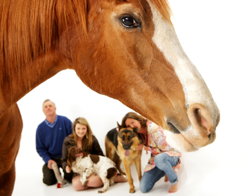Family and Animals image