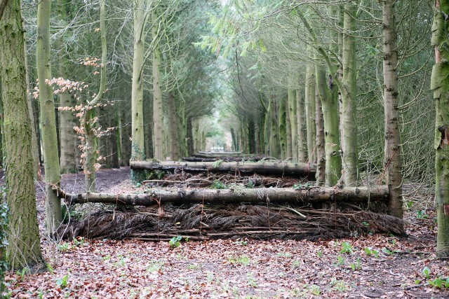 Everleigh wood jumps